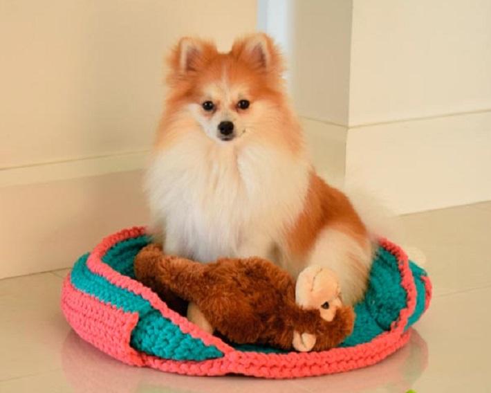 Maxi Caminha Pet de Crochê – Material e Receita